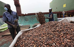 Cameroun: L'ivoirien Atlantic Group investit 7,2 milliards dans une usine de transformation du cacao