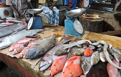 Over FCFA 7 Billion Available for Youpwe Fish Market